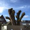 boom laten snoeien in Eindhoven